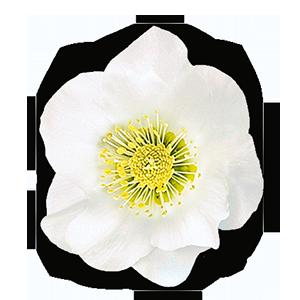 Blüte 6